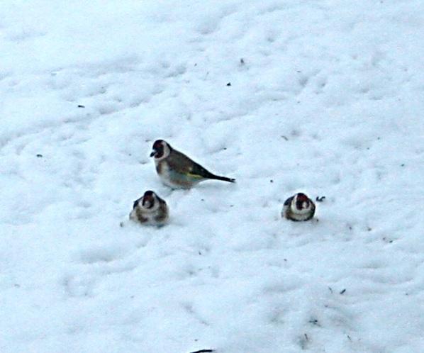 Stillits på foringsplassen_bilde 3_18jan2013