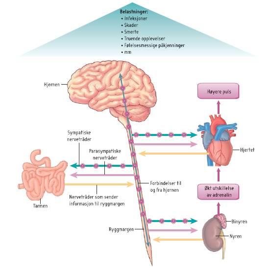 Figur 1_Biopsykologisk behandling av kronisk utmattelsessyndrom_2014