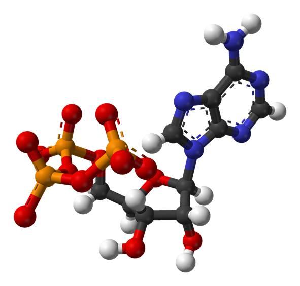 ATP molekyl