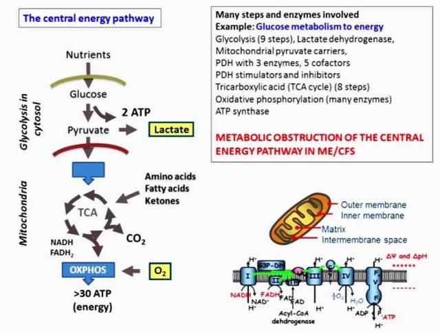 fluge_rme_okt2016_energimetabolisme