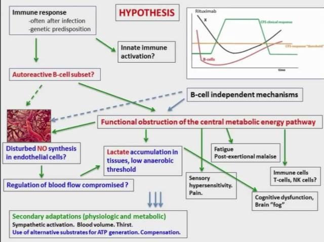 fluge_rme_okt2016_hovedhypotese_sykdomsmekanismer_patogenese